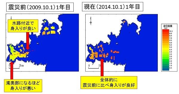 震災前後のカキ身肉重量の平面分布